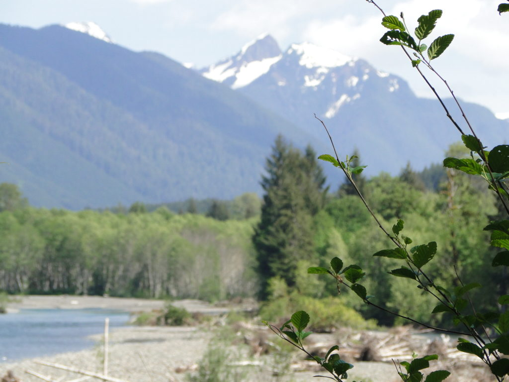 Mount Olympus seen in the background - Olympic Peninsula in the State of Washington